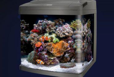 5 Best Nano Tanks For Saltwater Or Freshwater Aquariums