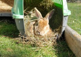 10 Best Outdoor Rabbit Hutches To Keep Your Bunny Safe