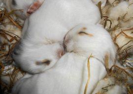 Best Rabbit Nesting Box Guide | Top 5 Picks