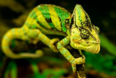The 5 Best Reptile Humidifiers | Reptile Fogger Buyers Guide