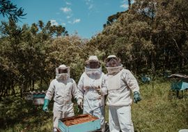 Best Bee Keeper Suit Reviews: Bee Suits For Each Stage!