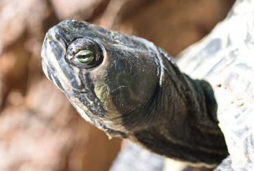10 Best Turtle Basking Platform: Docks, Ramps, Basking Areas