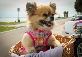 What Is The Best Dog Basket For Bike Rides? The Top 5 Pet Basket For Bikes