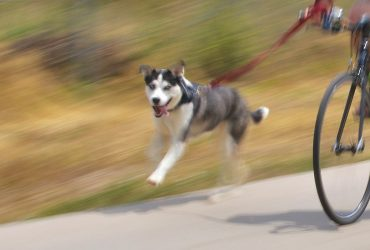 5 Best Dog Bike Leashes: Keep Your Dog Safe On The Road Or Track