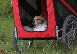What Is The Best Bike Trailer For Dogs? Focus On Strength And Safety!