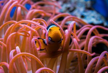 Coralife BioCube Fish Tank Review: 16 & 32 Gallon Bio Cube