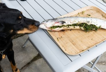 Can Dogs Eat Salmon and Salmon Skin? How To Cook Salmon For Dogs