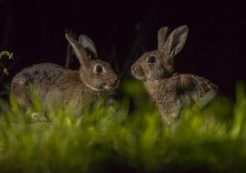 Can Rabbits See In The Dark? Do Rabbits Have Night Vision?