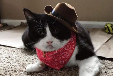 20 Cats With Cowboy Hats – Meowdy!