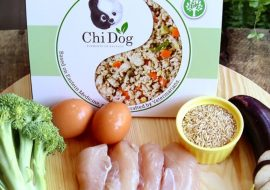 Chi Dog Review: What Is Chinese Medicine For Dogs?