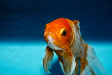 Why Is My Fish Tank Cloudy? How To Fix Cloudy Fish Tank Water