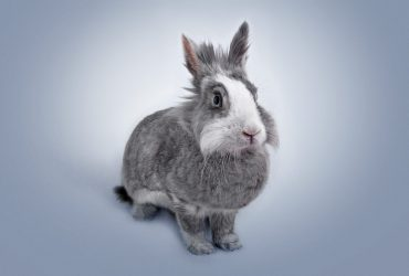 50 Different Rabbit Breeds – Rare Rabbit Breeds – Pics & Video!