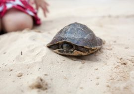 Yes, Turtles Sleep, But How, When, And Where Do Turtles Sleep?