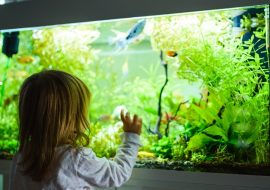 Aquarium UV Sterilizer Buyers Guide And Reviews For The Best Pick