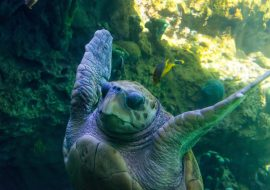 Turtle Names – Boys, Girls & Funny Names For Turtles
