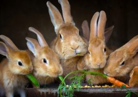 What Is A Group Of Rabbits Called? The Answer Might Surprise You!