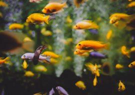 3 BEST Natural Methods To Lower The pH In Your Aquarium