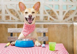 Can Dogs Eat Tuna Fish?Is Canned Tuna Good For Dogs?