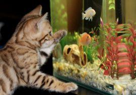 7 Best 55 Gallon Aquarium Fish Tanks | Kits, Stands, Hoods, & More