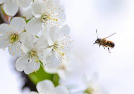 Manuka Honey Guide: What Is It All About?