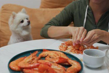Can Dogs Eat Shrimp? What About Shrimp Tails?