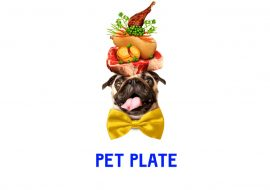 Pet Plate Reviews And Pet Plate Cost – Is It Right For Your Dog?