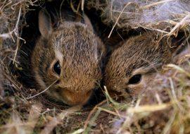 The Best Rabbit Bedding Materials – Healthy & Safe Bunny Bedding!