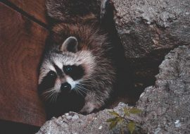 Protecting Your Home Against Animal Damage & Infestation
