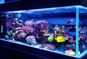 The 4 Different Types Of Reef Tank Lighting