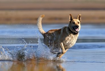The LEAST Effective Method To Retrieve A Dog That Has Got Off Leash