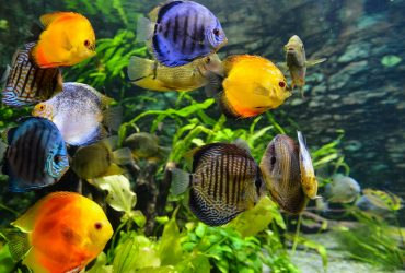 7 Best Rimless Aquariums – Compare Prices & Get The Best Deal