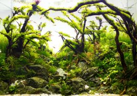 The 5 Best Self Cleaning Fish Tank – Self Sustaining Aquariums!