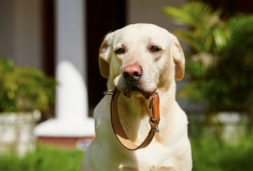 7 TOP Tips For Choosing the Perfect Dog Collar First Time!