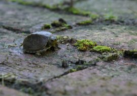 What Do Baby Turtles Eat? Best Food For Box, Painted, & Red Eared Sliders