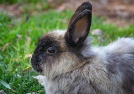 What Foods Can Kill Rabbits Or Make Them Sick?