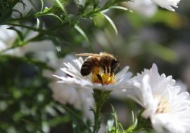 Why Are Bees Important? Why Do We Need Bees?